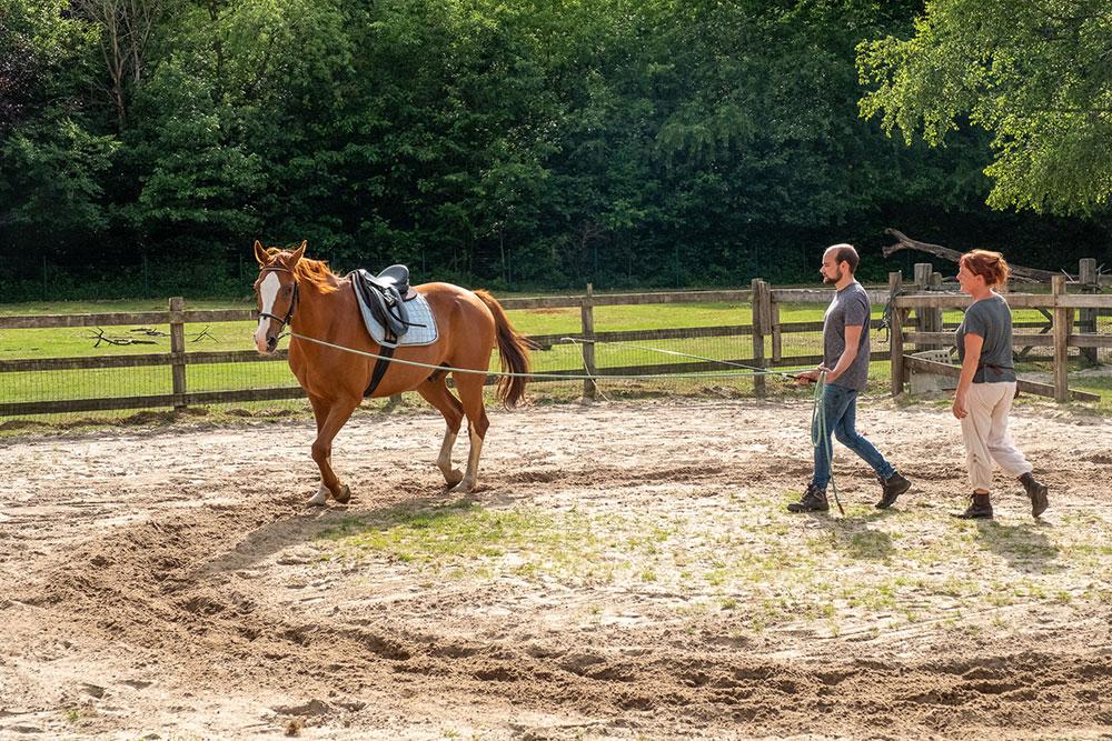 training van paard