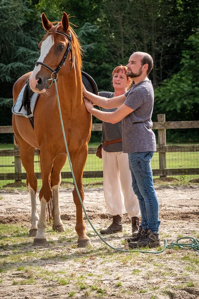 training van paarden