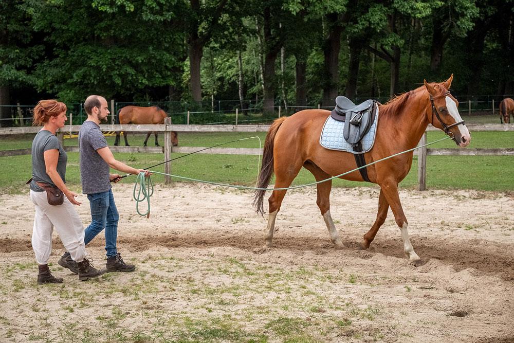 training van jouw paard